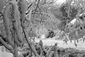 Landauer Art  Caryn Landauer Lacey Snow Photography.jpg