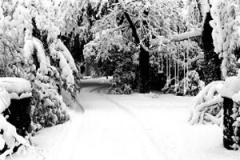 01-snow-photography