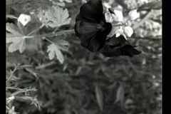 black-and-white-florals