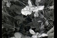 black-and-white-florals-01