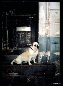 Landauer Art photography Bulldog in Paris.jpg